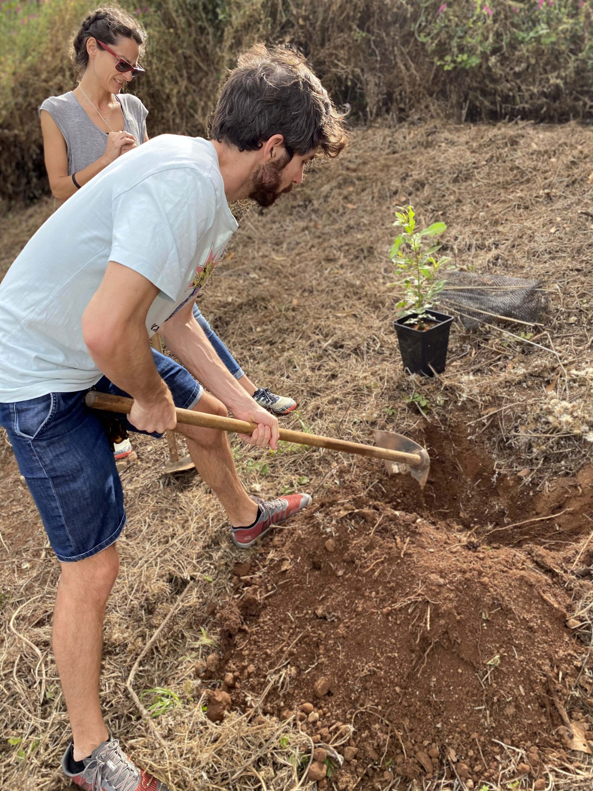 the surfers forest tree planting